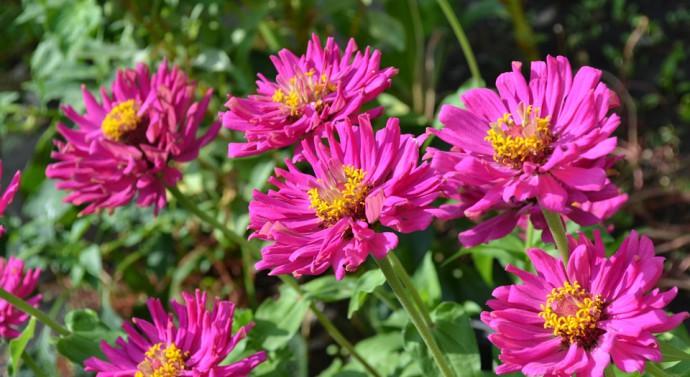 Nos conseils pour concevoir le jardin de vos rêves