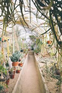 greenhouse-690448_1280